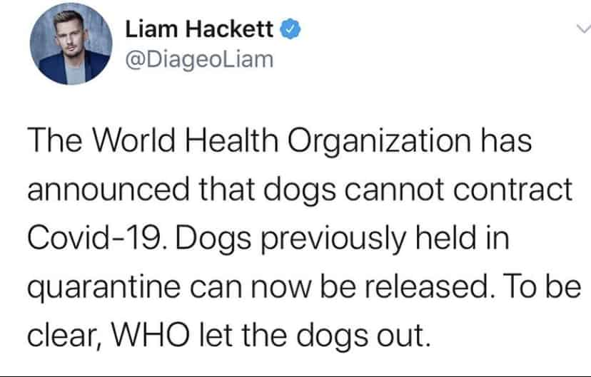 who let the dogs out coronavirus meme